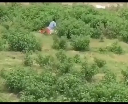 Video of a man caught on camera having sex with a Goat on a day broadlight